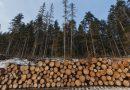В Вагайском районе Тюменской области полицейскими выявлен факт незаконной рубки деревьев