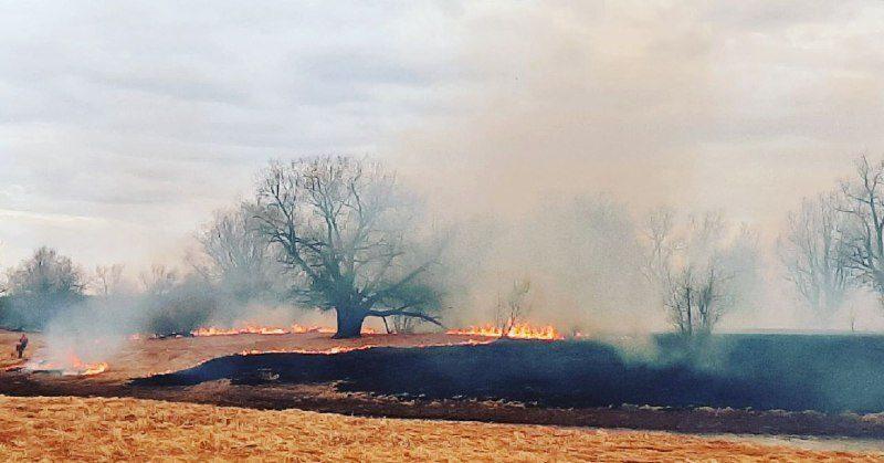 Жителям Тюменской области запретили посещать леса и жарить шашлыки